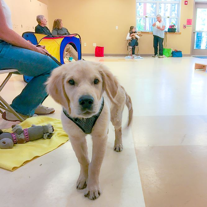 Puppy Classes Opens in new window